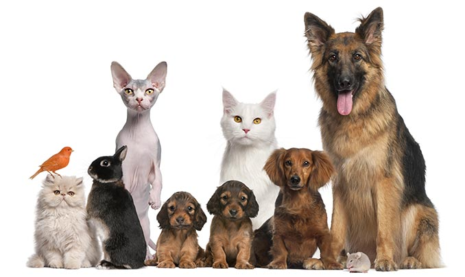 assurance animaux gmf chien chat