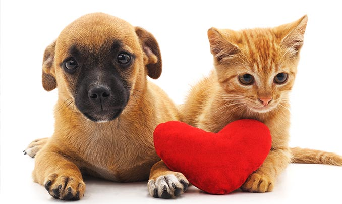 assurance animaux macif chien chat