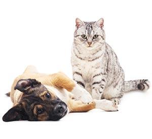 assurance animaux macif