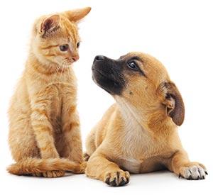 macif chiens chats